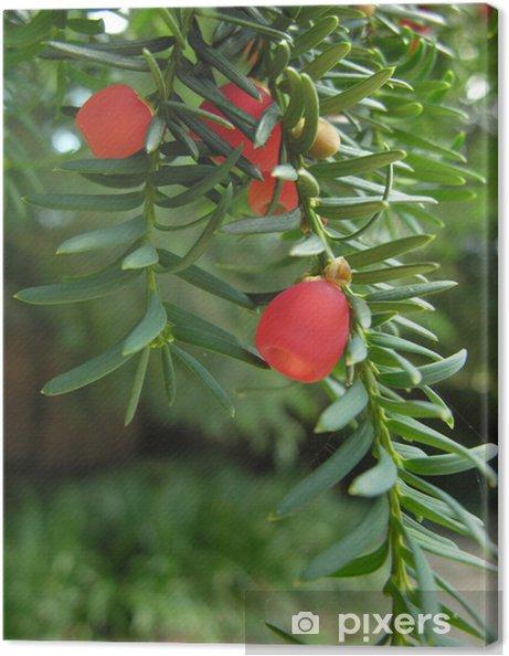 Leinwandbild Yew Beeren - Bäume