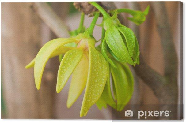Leinwandbild Ylang-Ylang Blumen am Baum, Thailand - Blumen