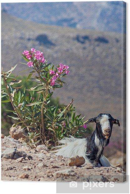 Leinwandbild Ziege auf Kreta - Europa