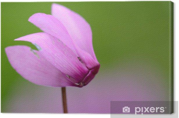 Leinwandbild Zyklamen - Blumen