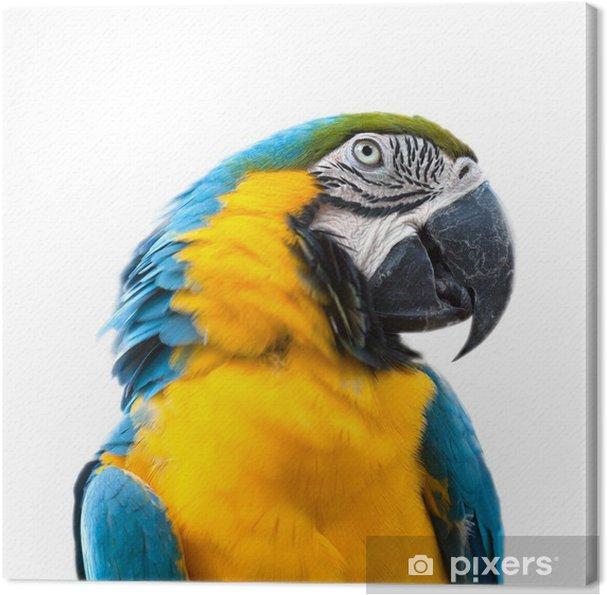 Spitzenstil rationelle Konstruktion bester Lieferant Lerretsbilde Ara papegøye