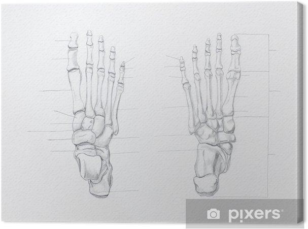 ce1964e3 Lerretsbilde Detalj av fotben blyant tegning på hvitt papir • Pixers ...