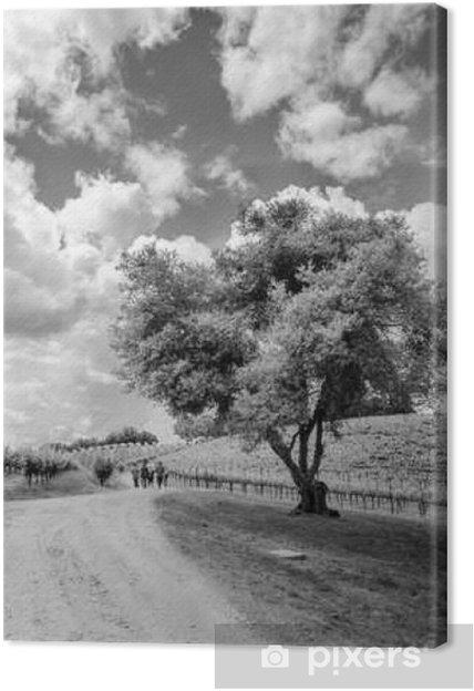 Lerretsbilde Shake Ridge Ranch Vineyards - Lanskap