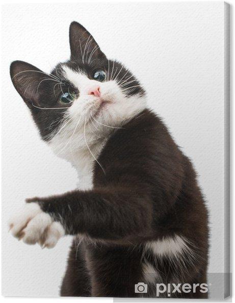 d3948872 Lerretsbilde Svart og hvit katt • Pixers® - Vi lever for forandring