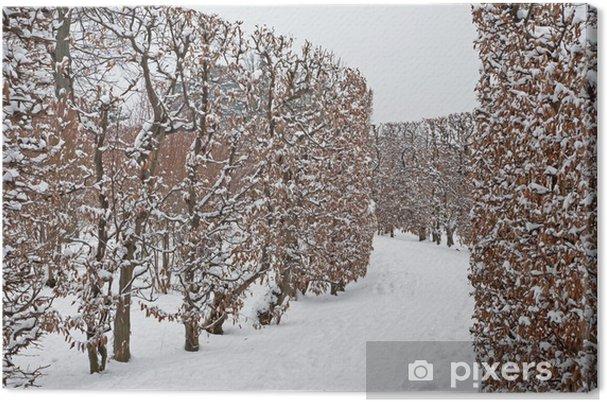 77968fb02 Lerretsbilde Wien - live gjerd fra hager av Schonbrun palass om vinteren