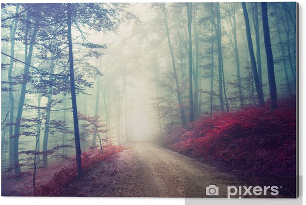 Obraz na Aluminium (Dibond) Magiczna leśna ścieżka - Las