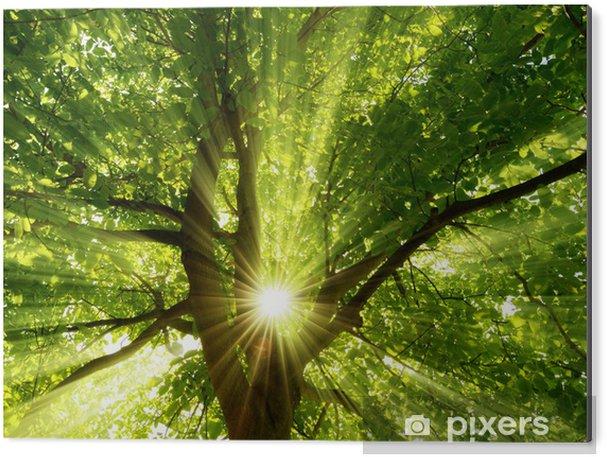Obraz na Aluminium (Dibond) Słońce wypromieniowuje wybuchowy w drzewie - Tematy