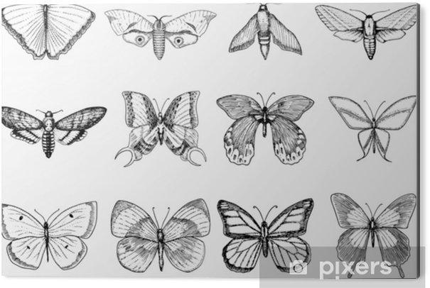 Obraz na Aluminium (Dibond) T-shirt z motywem tatuażu lub boho lub projekt scrapbookingu. mistyczny ezoteryczny symbol wolności i podróży. szkic motyla lub owada. kolekcja entomologiczna. grawerowane ręcznie rysowane w starym szkicu i stylu vintage - Rośliny i kwiaty