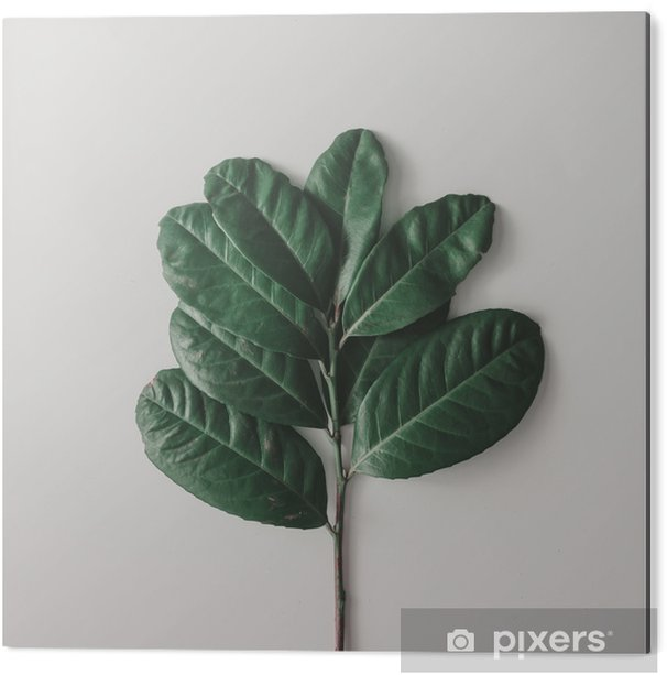 Obraz na Aluminium (Dibond) Twórczy minimalny układ liści na jasnym białym tle. płaskie lay. koncepcja przyrody. - Rośliny i kwiaty