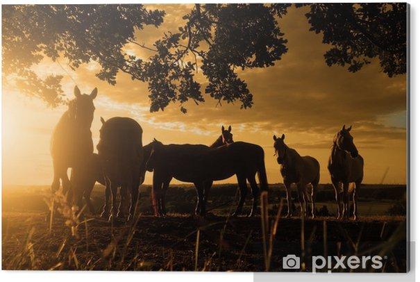 Obraz na Hliníku (Dibond) Pferde im sonnenuntergang - Zvířata