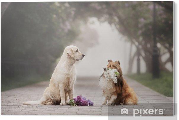 Obraz na PCV Historia miłosna dwóch psów - Zwierzęta