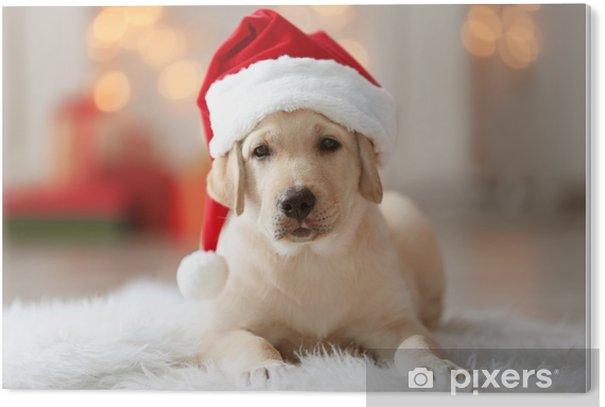 Obraz na PCV Ładny pies w santa claus kapelusz leżący na puszysty dywan w domu - Religia i kultura