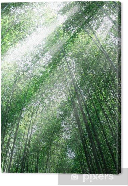 Obraz na plátně 竹林 と 木 漏 れ 日 - Pozadí