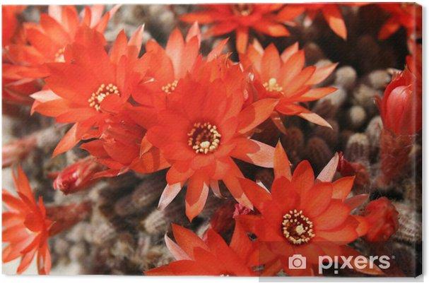 Obraz na plátně 636651 - Rostliny