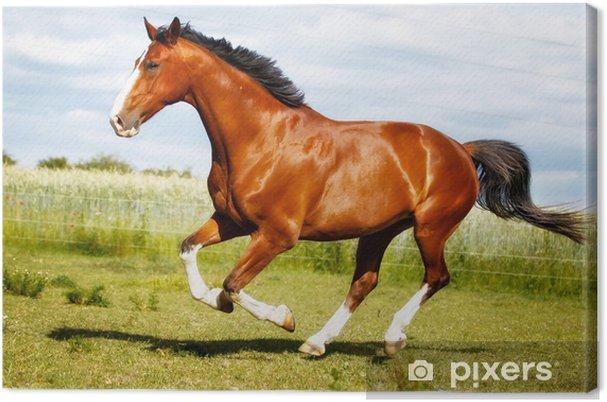 Obraz na plátně Běh čistokrevné koně - Témata