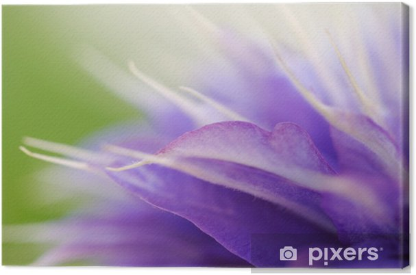 Obraz na plátně Blätter einer Clematis - Květiny