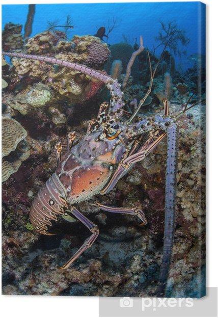 Obraz na plátně Caribbean Lobster 2 • Pixers® • Žijeme pro změnu fa117a7dc2