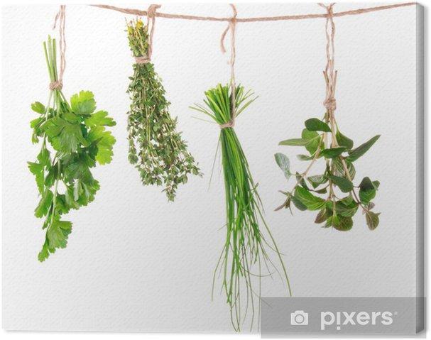 Obraz na plátně Čerstvé bylinky visí na bílém pozadí - Osud