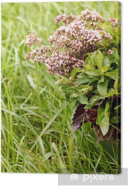 Obraz na plátně Čerstvé bylinky - Koření a bylinky