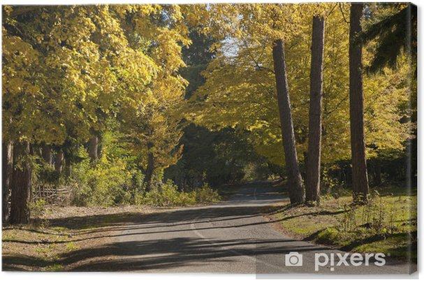 Obraz na plátně Cesta v lese na podzim - Památky