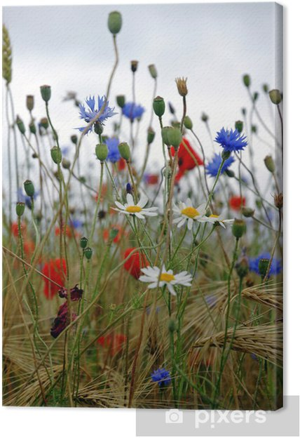 Obraz na plátně Divoké květiny - Květiny