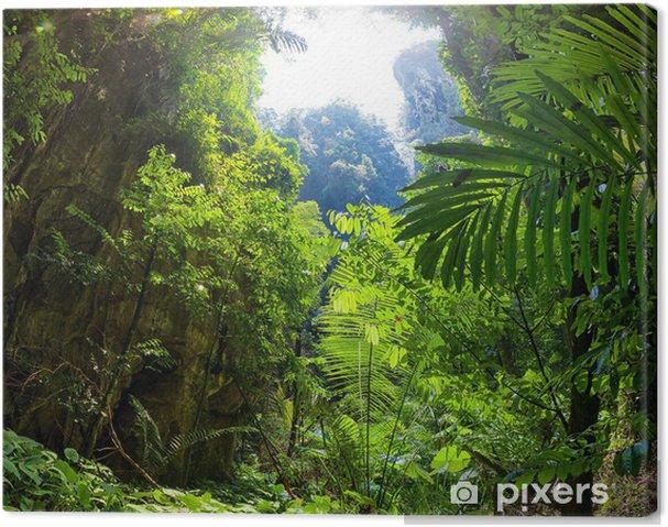 Obraz na plátně Džungle Les - Témata