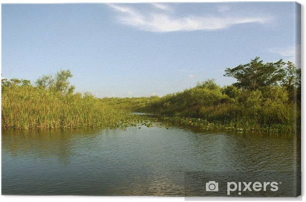 Obraz na plátně Everglades scenérie - Venkov