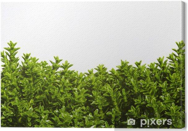 Obraz na plátně Greenhouse 04 - Náboženství