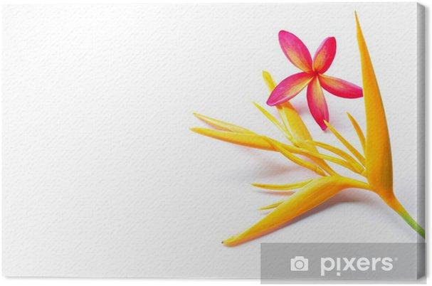 Obraz na plátně Heliconia A Plumeria izolované - Životní styl, péče o tělo a krása