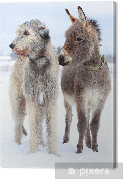 Obraz na plátně Irský vlkodav pes a osel • Pixers® • Žijeme pro změnu 7d21674aca