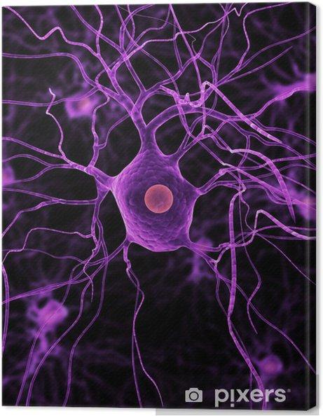 Obraz na plátně Izolované neurony - Zdraví a medicína