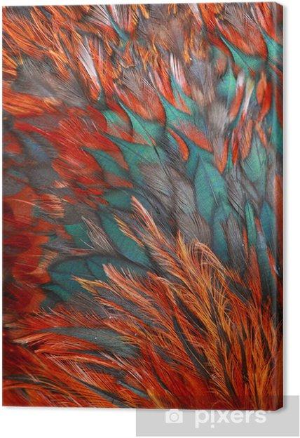 Obraz na plátně Jasný hnědý peří skupina nějakého ptáka - Pozadí