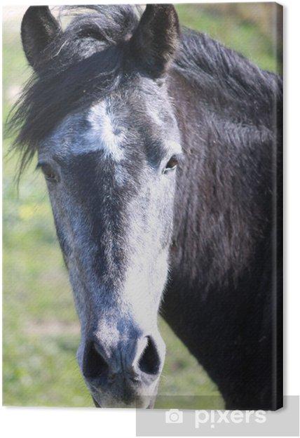 Obraz na plátně Jízda na koni Bologna - Savci