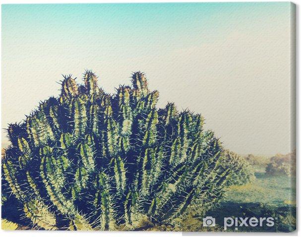 Obraz na plátně Kaktus v poušti • Pixers® • Žijeme pro změnu 0c68fbc7f6
