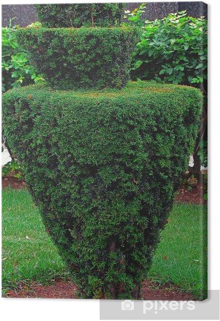 Obraz na plátně Kónický tvar malý strom • Pixers® • Žijeme pro změnu 2cdf99d0968