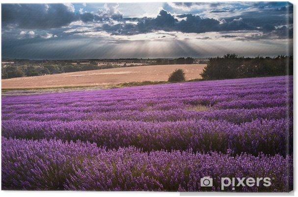 Obraz na plátně Krásné levandule pole krajina s dramatickou oblohou - Témata