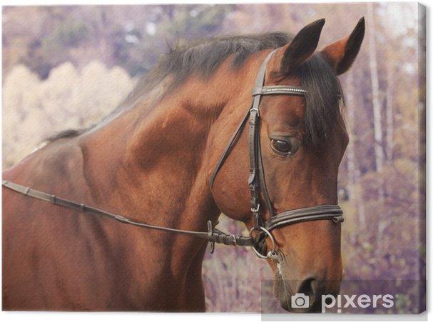Obraz na plátně Krásné zátoky sportovní kůň portrét na podzim - Savci
