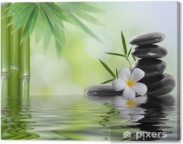 Obraz na plátně Lázně kameny s keře - Témata