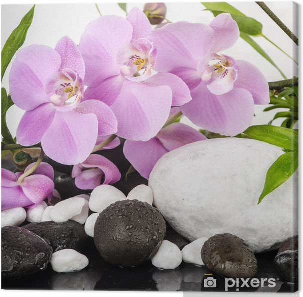 Obraz na plátně Lázně / Krása: orchideje s bílými a černými kameny - Styly