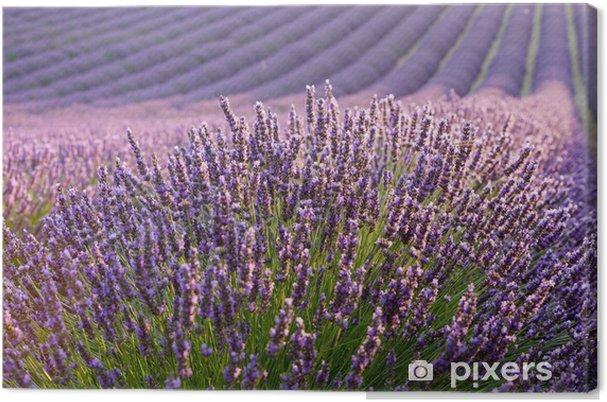 Obraz na plátně Levandulová pole při východu slunce - Styly