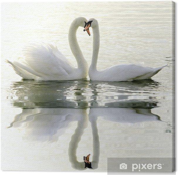 Obraz na plátně Milující Labutě - Labutě