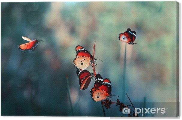 Obraz na plátně Motýl - Zvířata