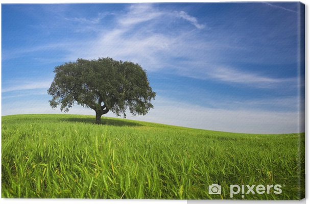 Obraz na plátně Osamělý strom na jaře krajina s zelené trávy a modrá obloha - Venkov