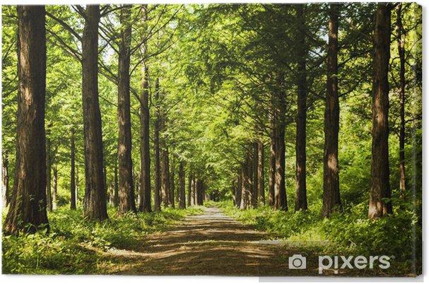 Obraz na plátně Osvětlení Tree Trail - Témata