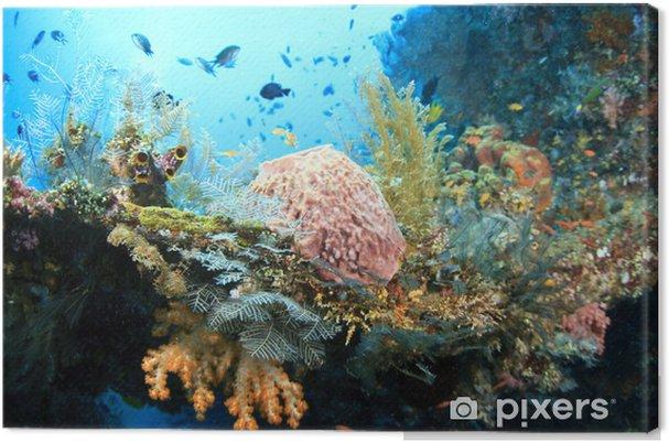 Obraz na plátně Plodný růst korálů - Podvodní svět