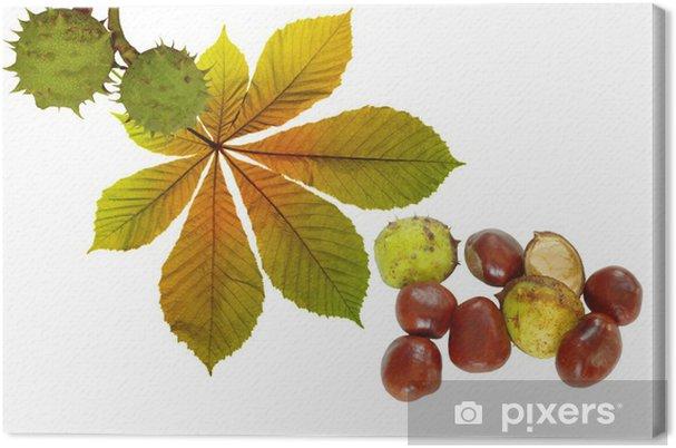 Obraz na plátně Podzimní kaštany - Stromy