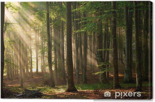 Obraz na plátně Podzimu lesních dřevin. příroda zelená dřevo slunečnímu záření pozadí. - Témata