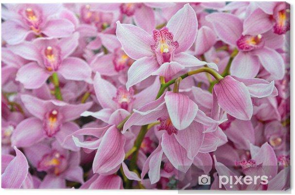 Obraz na plátně Pozadí krásné orchideje. - Témata