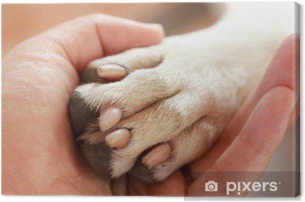 Obraz na plátně Přátelství mezi člověkem a psem - třesoucí se rukou a tlapky - Savci