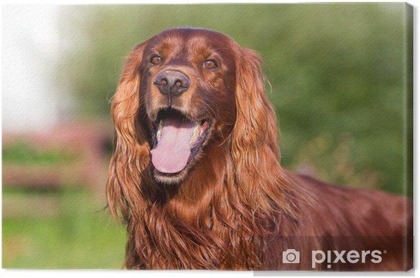 Obraz na plátně Red Irský setr pes • Pixers® • Žijeme pro změnu 271f003a98